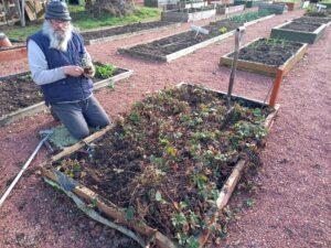 Man gardening at the Westraven community garden